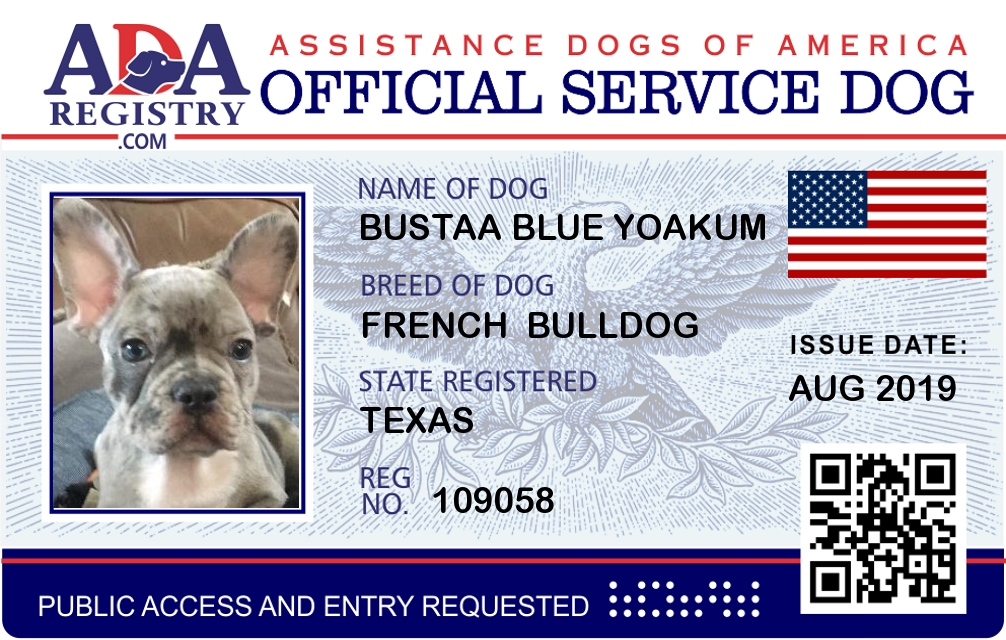 Service Dog Registration For Bustaa Blue Yoakum Ada Assistance Dog Registry