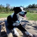 Devo enjoys a sunny day