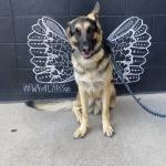 This is my boy Riley. My service dog.