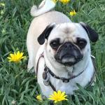 Angel Bug Therapy Dog Photo