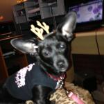 MISSY MAY DRESSED UP FOR CHRISTMAS HER FIRST YEAR