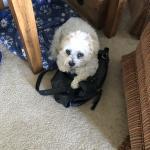 Joey the Service Dog