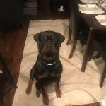 Ciroc Emotinoal Support Dog
