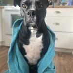 Dexter after a shower