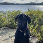 Bella Service Dog in the ADK